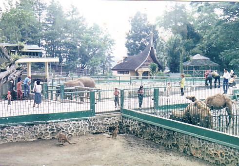 Objek-wisata-Kebun-Binatang-Bukittinggi